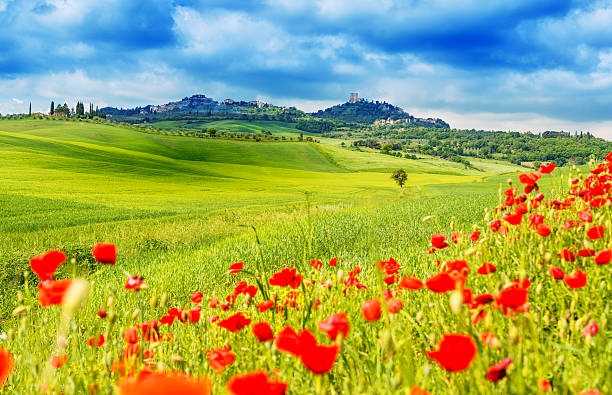 Typical Landscape Of Tuscany Wall Art
