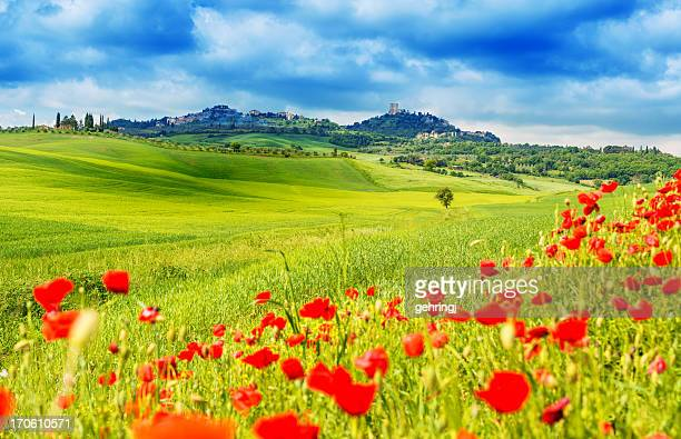 typical landscape of tuscany - poppy field stock photos and pictures