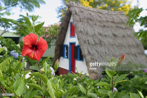typical madeira house - madeira island stock photos and pictures