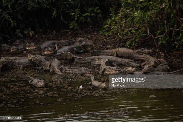 Typical Pantanal Fauna in Pocone, Mato Grosso, Brazil, on August 22, 2020. The brazilian Pantanal - one of the largest tropical floodplains in the...