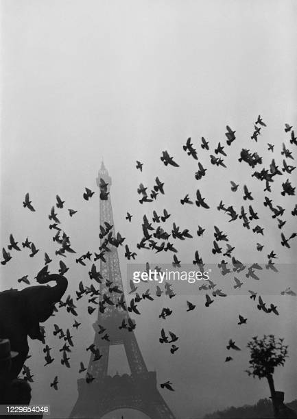 Typical Parisian view taken in the 1930s of a flight of pigeons in front of the Eiffel Tower shrouded in mist.