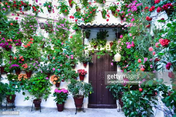typical patio in cordoba, spain, with hundreds of potted plants and flowers all around - córdoba - fotografias e filmes do acervo
