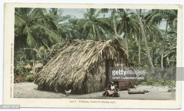 Typical Puerto Rican hut with thatched roof surrounded by palm trees Puerto Rica 1903 From the New York Public Library
