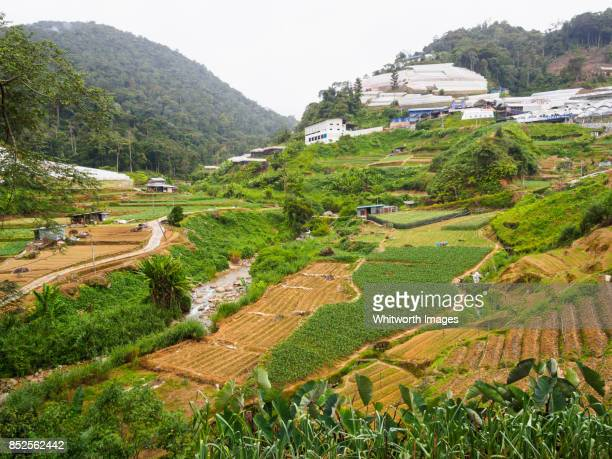 Typical terraced vegetable farms in Cameron Highlands, Malaysia