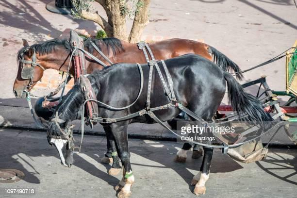 typical tourist horse and cart transportation in marrakesh morocco - pferdeantrieb stock-fotos und bilder