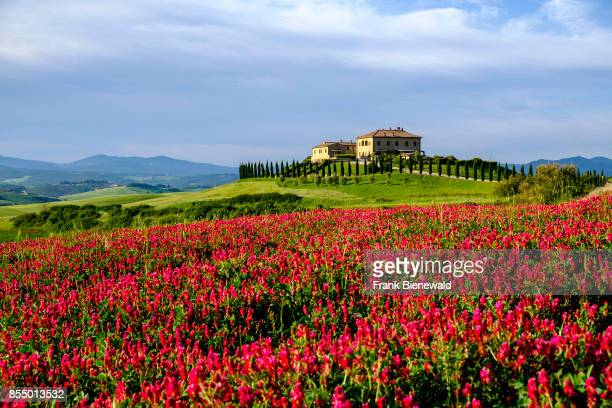 Typical tuscanian landscape with the farmhouse Podere le Volpaie on a hill with flowers in Val di Cecina.