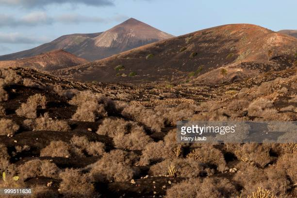 Typical vineyards in dry cultivation in volcanic ash, evening light, behind the Guardilama volcanic mountain, wine-growing region La Geria, Lanzarote, Canary Islands, Spain
