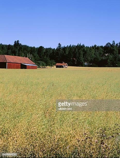 Typische Landschaft Kornfeld mit Bauerhof 1999
