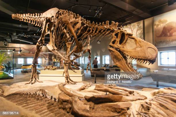 tyrannosaurs rex dinosaur - dinosaur stock pictures, royalty-free photos & images