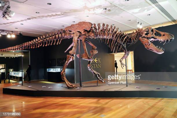 Tyrannosaurus Rex dinosaur fossil skeleton is displayed in a gallery at Christie's auction house on September 17, 2020 in New York City. Owned by the...