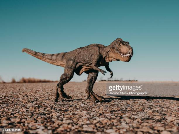 tyrannosaurus rex dinosaur - t rex stock-fotos und bilder