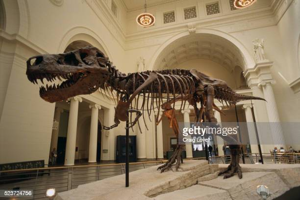 tyrannosaurus rex fossil - field museum of natural history stock pictures, royalty-free photos & images
