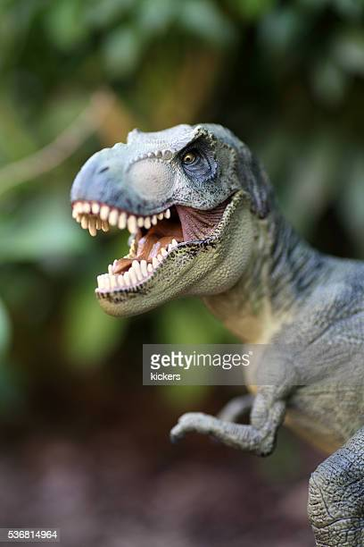 tyrannosaurus rex plastic model portrait - t rex stock photos and pictures