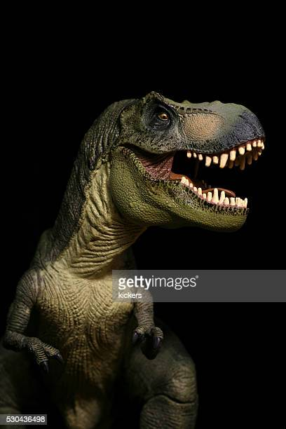 tyrannosaurus rex plastic model portrait roaring - t rex stock photos and pictures