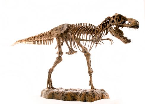 tyranosaurus rex skeleton, dinosaure squelette 182369934