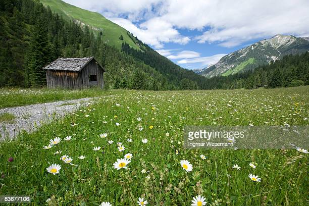 tyrolean summer meadows
