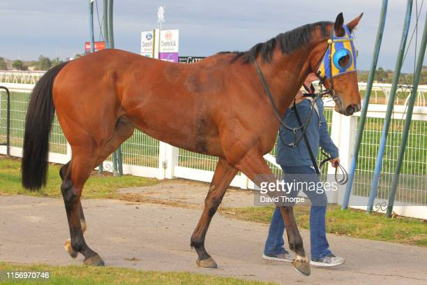 Tyson Returns in the mounting yard after winning the Sam Miranda King Valley 0 58 Handicap on July 21 2019 in Wangaratta Australia