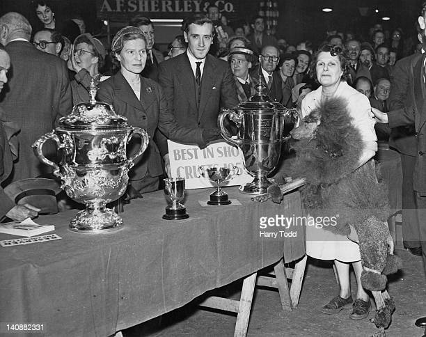 Tzigane Aggri of Nashend a poodle owned by Mrs Proctor wins Best In Show at the Crufts international championship UK 7th February 1955