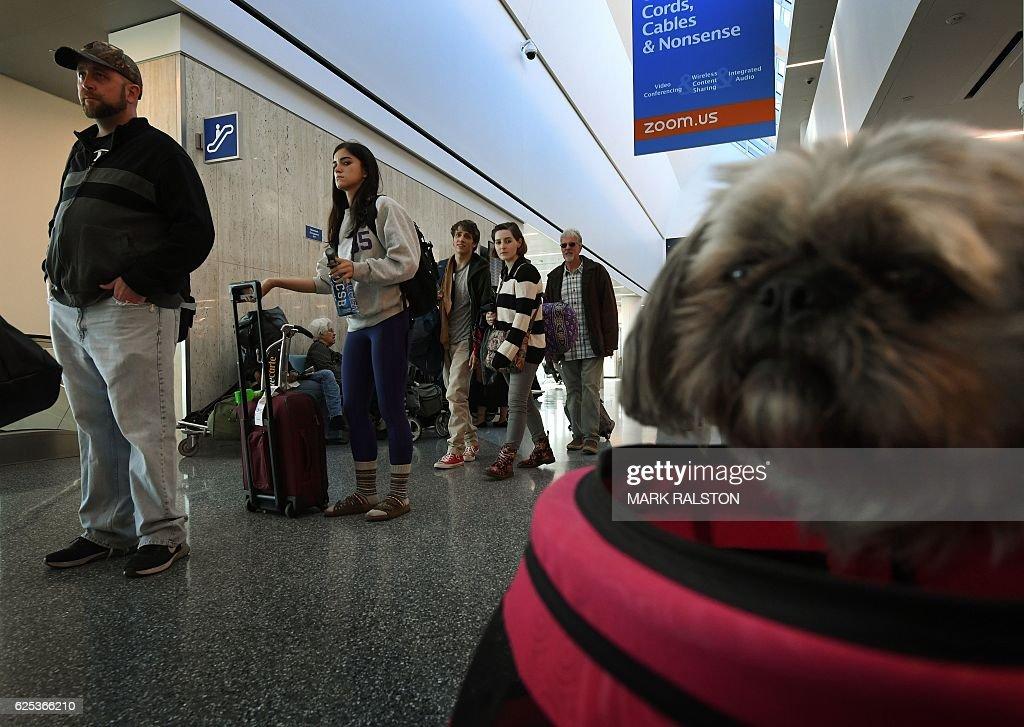US-HOLIDAY-ANIMAL-THANKSGIVING : News Photo