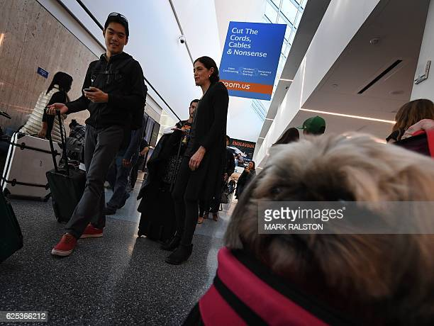 Tzuzi the 'comfort dog' watches as Thanksgiving holiday crowds make their way through the departure hall at the Los Angeles International Airport...