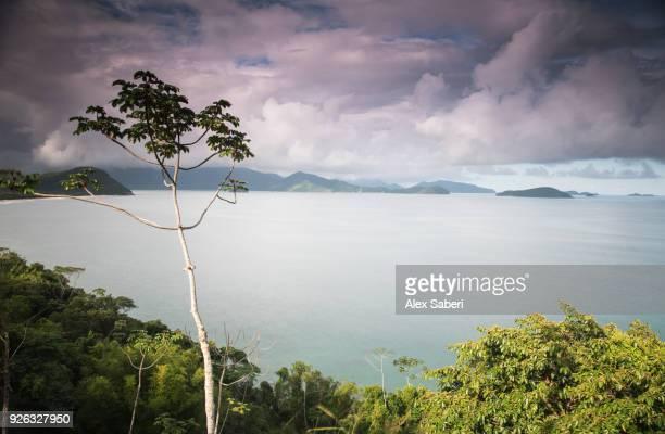 The Atlantic Rainforest in Serra do Mar National Park.