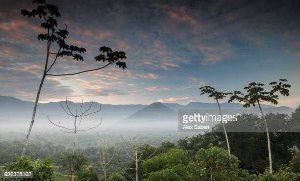 The Atlantic rainforest and Serra do Mar mountains and jungles.