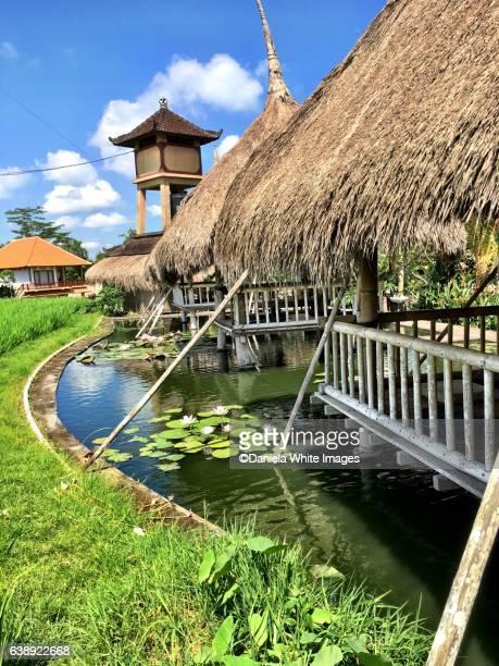 Ubud , Bali, Indonesia