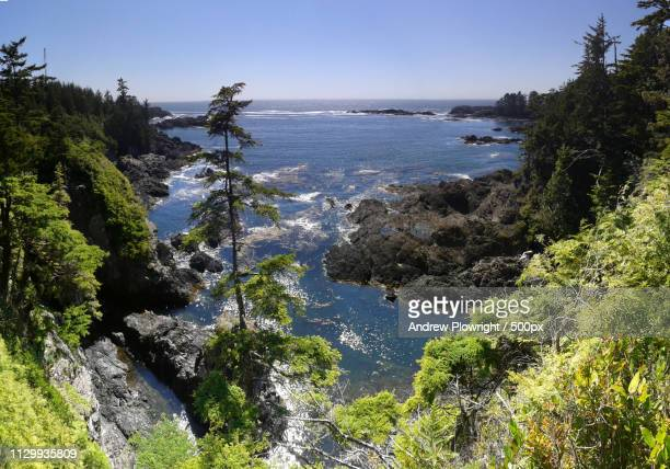ucluelet coast - vancouver island stock pictures, royalty-free photos & images