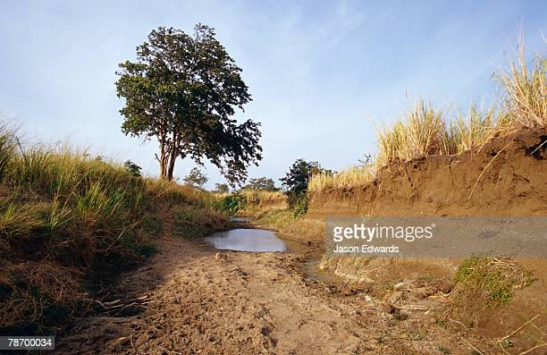Small stagnant pools line the bottom of a river bed in the dry season.