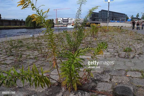 Ueberall zwischen den Steinen und an den Kanten und Baenken im Spreebogen wuchert Gras und Unkraut. Abgebaute Stellen im Gruenflaecheamt und fehlende...
