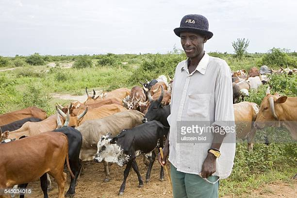 Herdsman with AnkoleWatusi cattle herd on a road