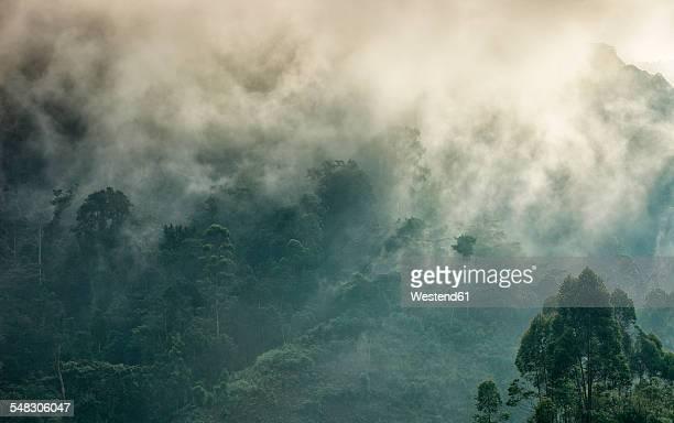 uganda, bwindi impenetrable national park, bwindi impenetrable forest - uganda stock pictures, royalty-free photos & images