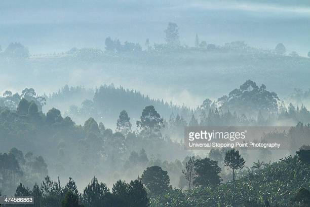 Ugandan Hills in Morning Mist
