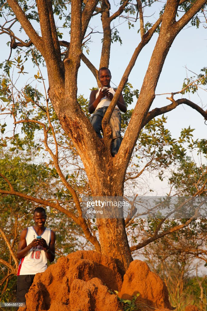 Ugandan searching for cell phone signal in a remote rural area : News Photo