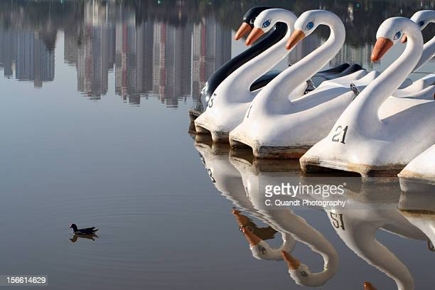 ugly duckling - ugly duckling stock photos and pictures
