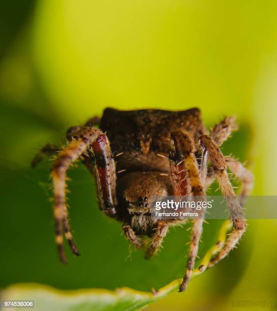 ugly face - ugly spiders stock photos and pictures