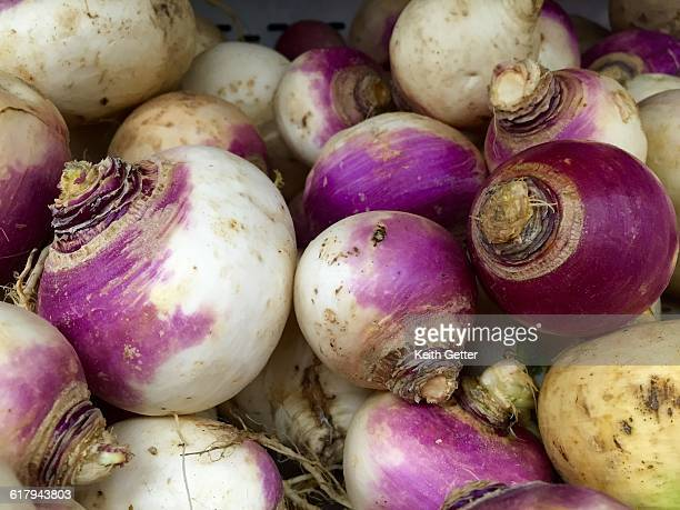 ugly is beautiful - turnip stock pictures, royalty-free photos & images
