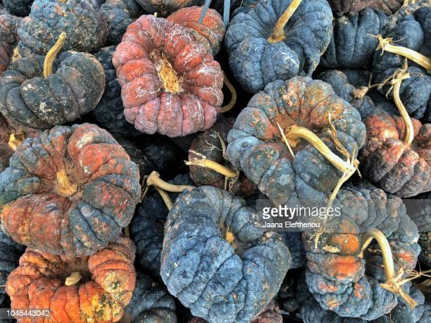 ugly pumpkins - ugly pumpkins stock photos and pictures