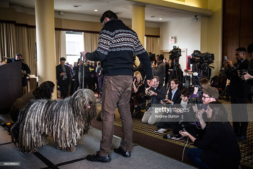 The Westminster Kennel Club Holds Preview Event Ahead Of Next Week's Dog Show : News Photo