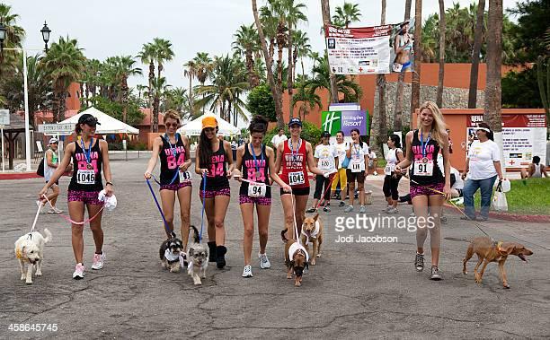 ujena bikini corsa di 5 km a cabo san lucas, messico - grande gruppo di animali foto e immagini stock