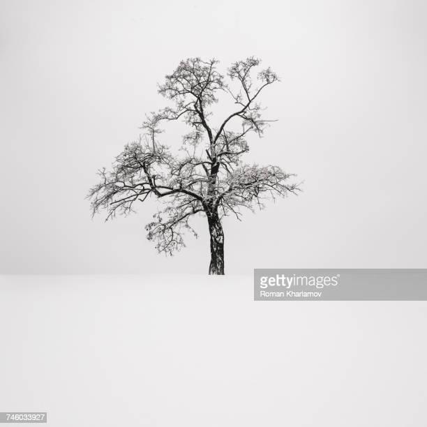 ukraine, dnepropetrovsk region, dnepropetrovsk city, single tree in winter - eén boom stockfoto's en -beelden