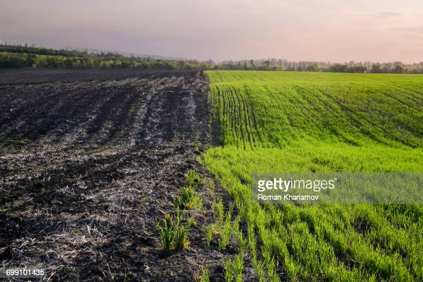 Ukraine, Dnepropetrovsk region, Novomoskovsk district, Agricultural fields