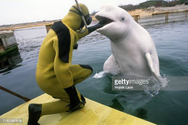 Ukrainian army trains marine animals for military service at oceanarium at Crimean Peninsula dolphins and seals are planned to be used for searching...