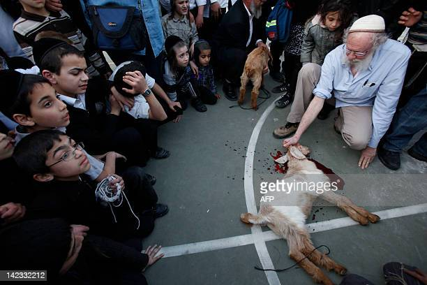 Ultra orthodox children gather as members of the Temple Institute perform a Jewish ritual the slaughter in a oneyearold flawless lamb in an enactment...