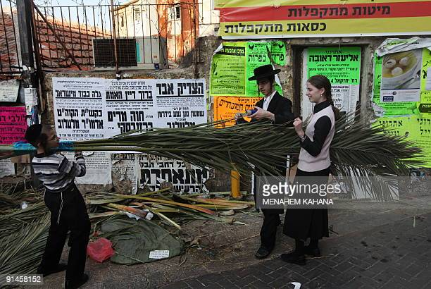 Ultra Orthodox Jews carry branches of palm tree for the roof of their Sukkah or Tabernacles structures to be used during the celebration of Sukkot...