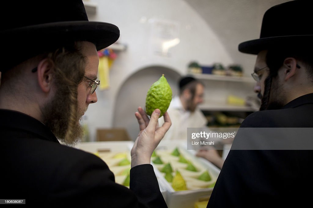 Ultra Orthodox Jews inspect an Etrog (citron) fruit which will be used during the upcoming Jewish festival of Sukkoth in the religious Mea Shearim neighbourhood September 15, 2013 in Jerusalem, Israel. The Feast of the Tabernacles, which begins Wednesday evening September 18, 2013, commemorates the biblical Hebrews' 40 years of wandering in the desert after the exodus from Egypt some 3200 years ago.