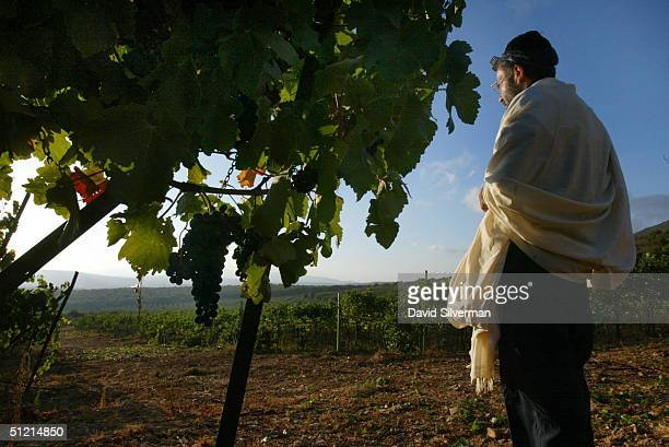UltraOrthodox Jew Haim Abergil who ensures that all of Dalton Wineries wines conform to strict Jewish kosher laws faces the sunrise as he recites his...