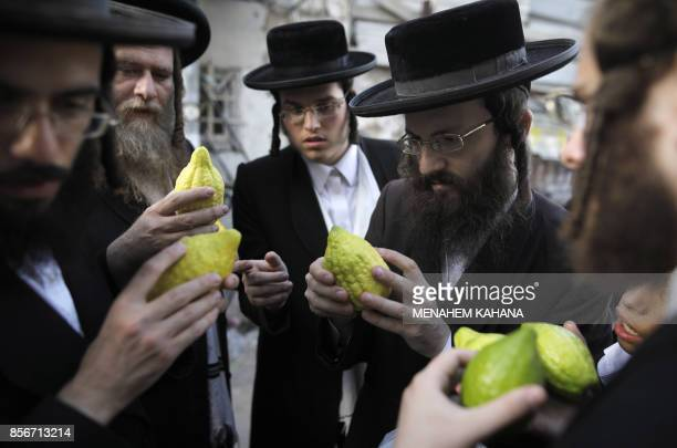 UltraOrthodox Jewish men inspect the Etrog also known as the citrons one of four species used during the celebration of Sukkot the feast of the...