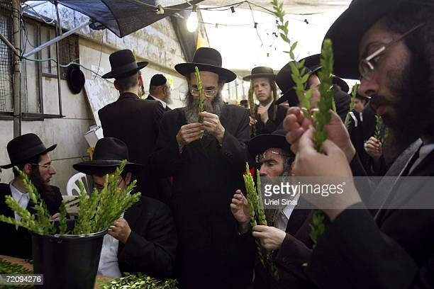 Ultra-Orthodox Jews inspect myrtle twigs as they shop for plants used in Jewish rituals for the upcoming Sukkot festival on October 5, 2006 in the...