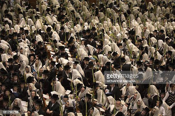 UltraOrthodox Jews of the Belz Hasidic Dynasty hold the four plant species the Lulav the Etrog the Hadas and the Arava as they pray during the last...